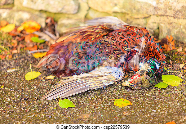 dead bird on the ground - csp22579539