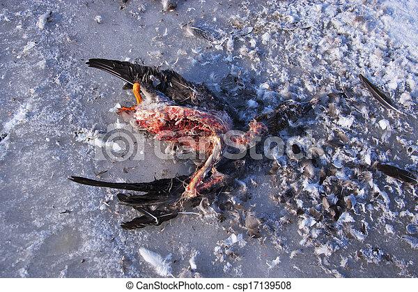 Dead Bird - csp17139508