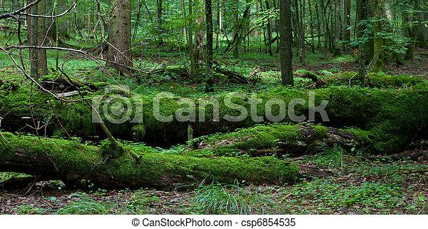 Dead broken trees moss wrapped - csp6854535