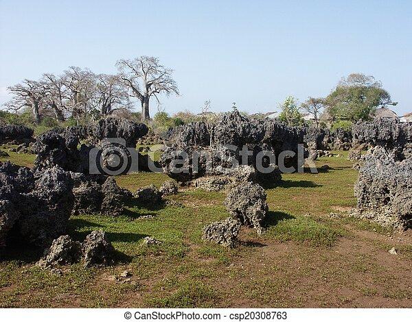 Dead Coral Garden - csp20308763
