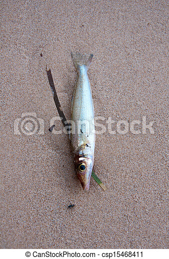 Dead fish on the beach - csp15468411