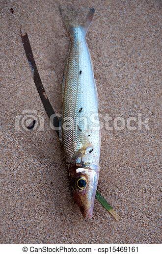 Dead fish on the beach - csp15469161
