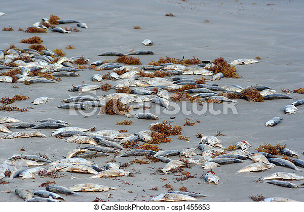 Dead Fish on the Beach - csp1455653