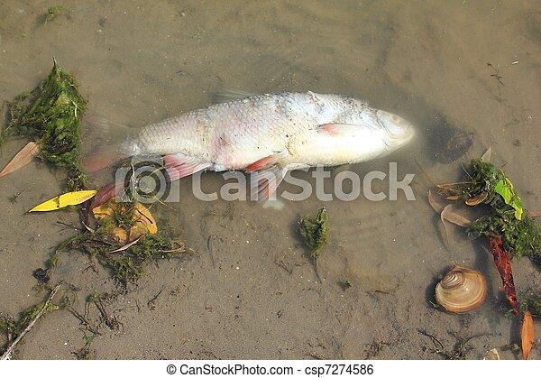 dead fish - csp7274586