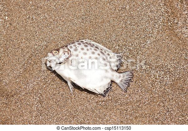 Dead fish - csp15113150
