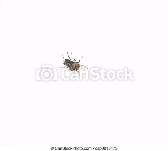 Dead Fly - csp0015473