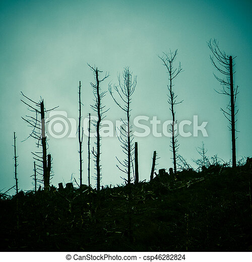 Dead Forest After A Fire - csp46282824
