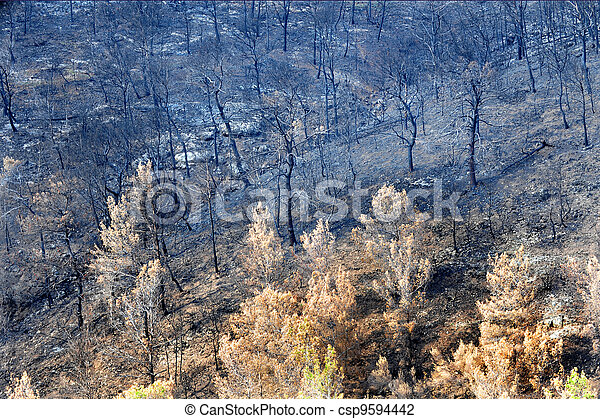 Dead Forest After Fire - csp9594442