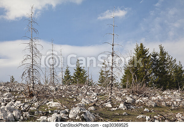 Dead forest in the mountains - csp30369525