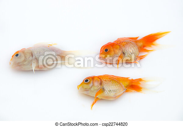 Dead gold fish - csp22744820