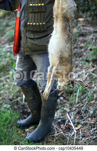 Dead hare - csp10435449