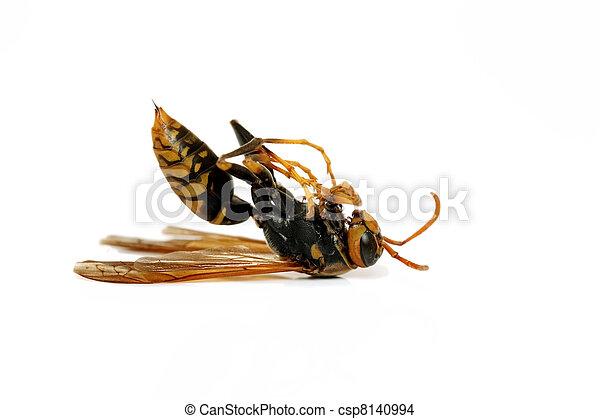 Dead hornet - csp8140994
