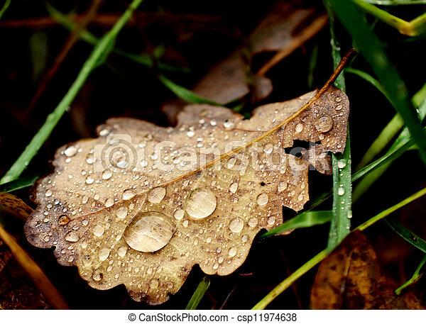 Dead leaf - csp11974638