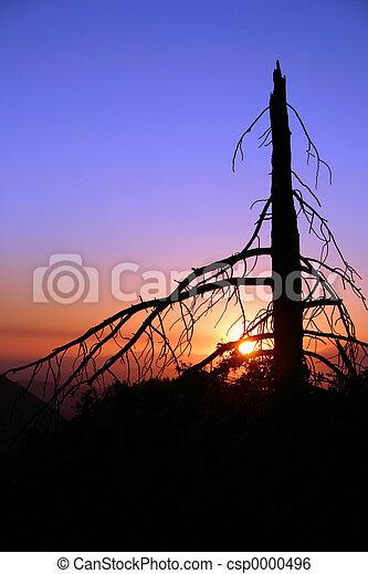 Dead Pine - csp0000496