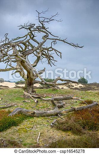 Dead tree - csp16545278
