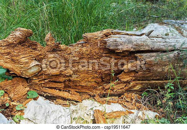 Dead tree, rotten . - csp19511647