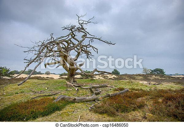 Dead tree - csp16486050
