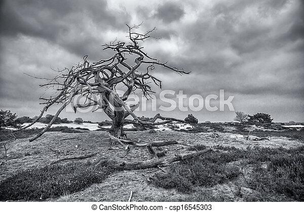 Dead tree - csp16545303