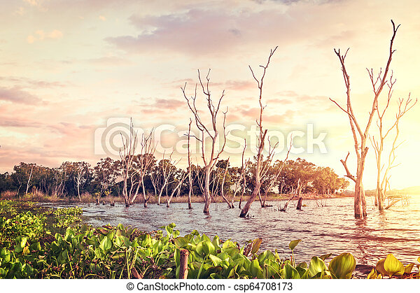 Dead Trees in the forest around a lake with Sunset. - csp64708173