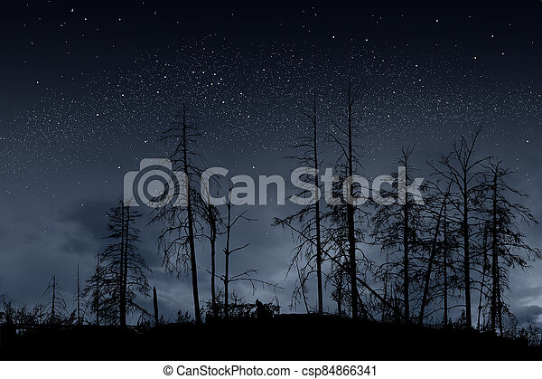 dead trees on dark night with bright stars - csp84866341