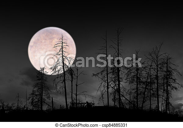 dead trees on dark night with bright full moon - csp84885331