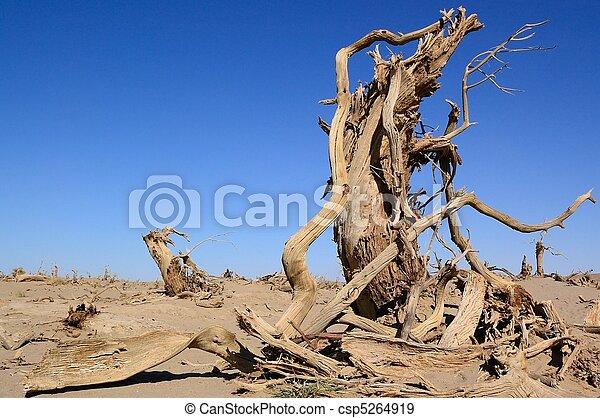 Dead trees - csp5264919
