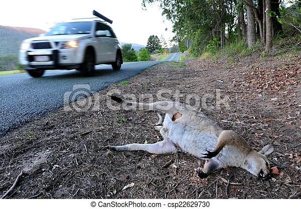 Dead Wild Kangaroo in Queensland Australia - csp22629730