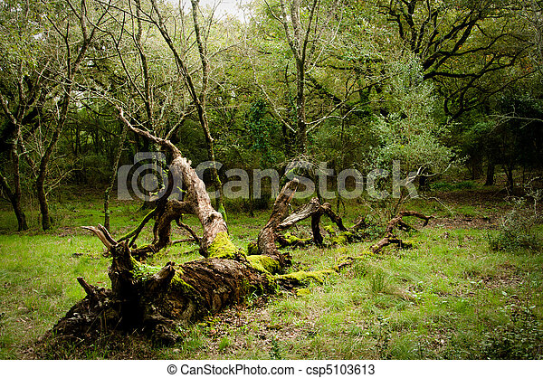 Death of a tree, autumn - csp5103613