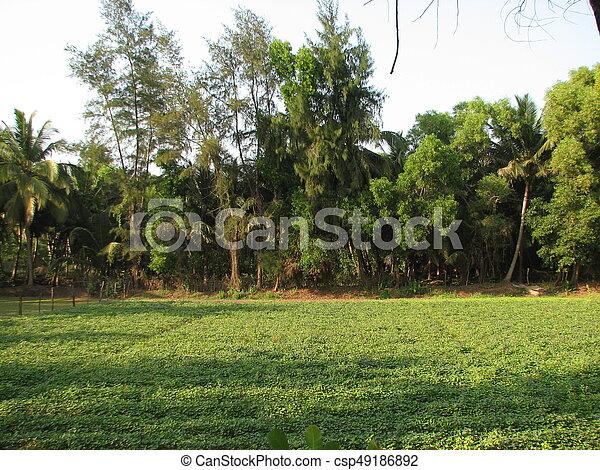 Deciduous and coniferous subtropical forest. - csp49186892