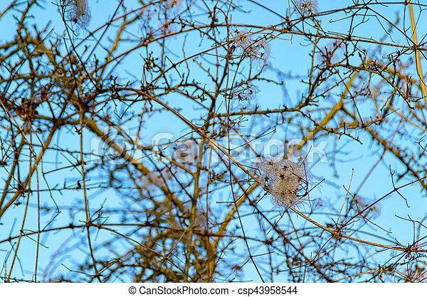 Deciduous tree in the winter - csp43958544