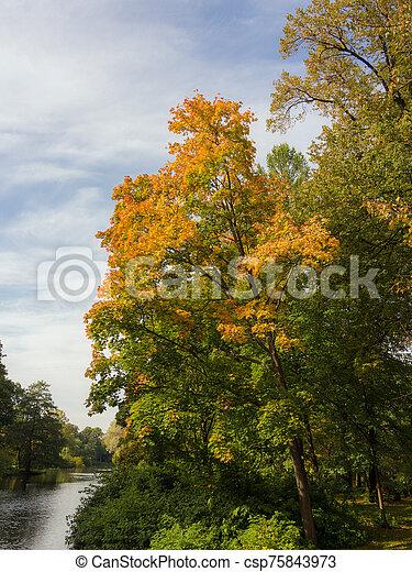 deciduous trees in the autumn park - csp75843973
