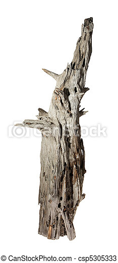 Decomposed old snag tree on the white background - csp5305333