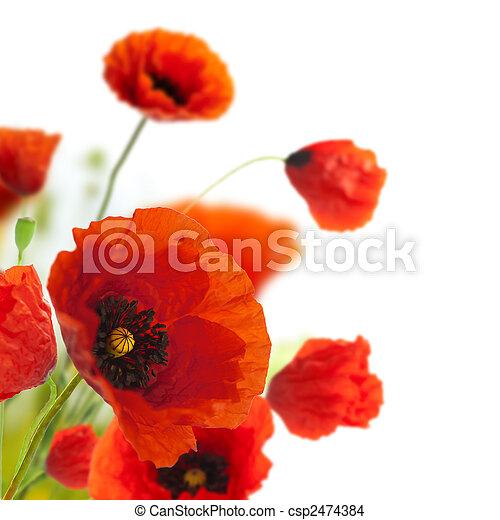 decoración, -, flores, amapolas, floral, esquina, frontera, diseño - csp2474384