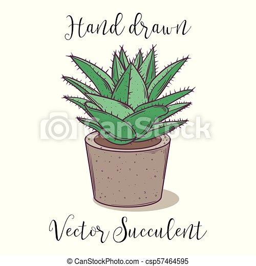 Decoration Colorful Plant Succulent In A Concrete Flower Pot Hand Drawn Vector Illustration Cactus Aloe