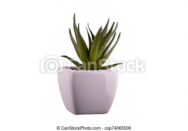 Decoration plant in a pot on white background - csp74065506