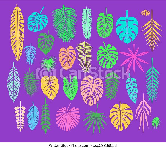 Decoration with Tropical Leaves - csp59289053