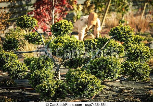 Decorative Beautiful Garden Tree - csp74364664