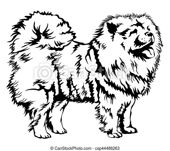 Decorative Chow Chow Vector Illustration Decorative Black And