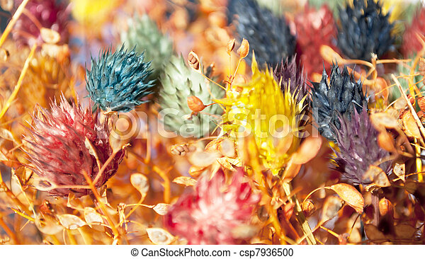 Decorative colorful dried flowers background - csp7936500