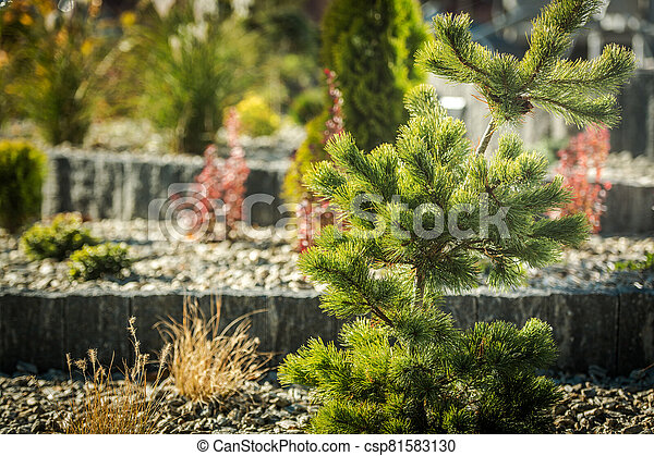 Decorative Conifer and Rockery Garden Close Up - csp81583130