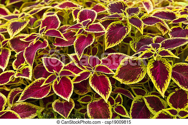 decorative design with colored leaves - csp19009815