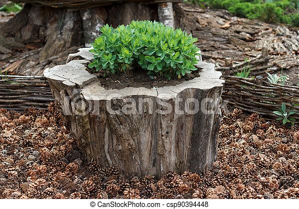 Decorative garden arrangement - csp90394448