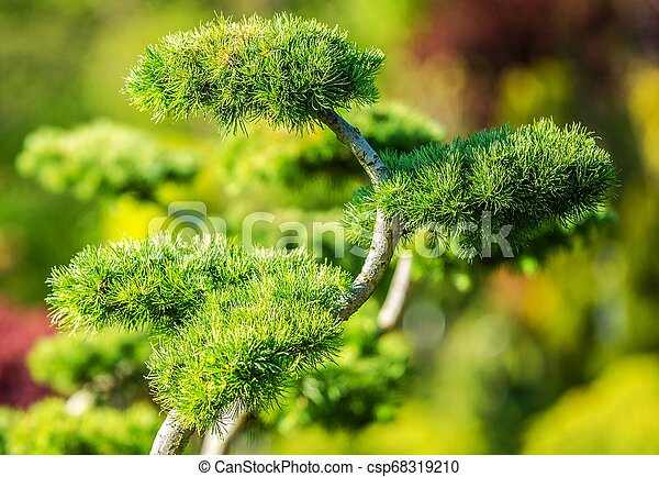 Decorative Garden Tree - csp68319210