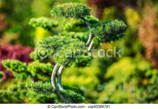 Decorative Garden Tree - csp50366741