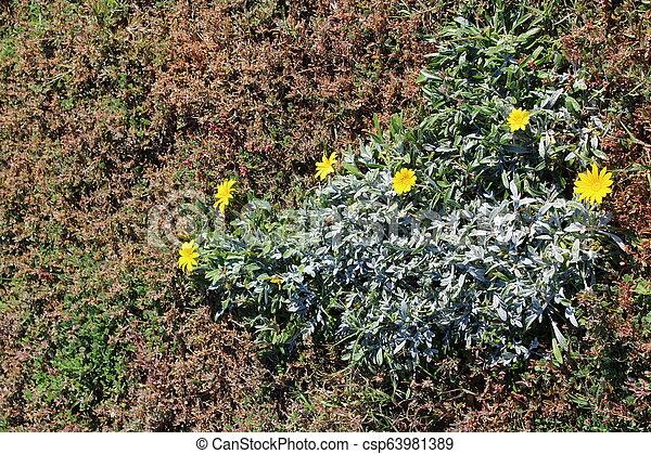 Decorative garden with plants - csp63981389