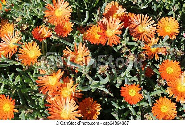 Decorative garden with plants - csp64894387