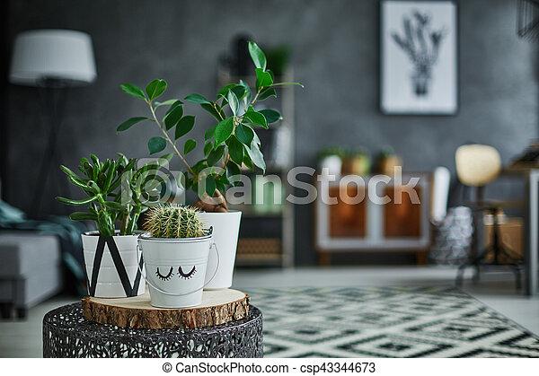 Decorative green houseplant in pot - csp43344673