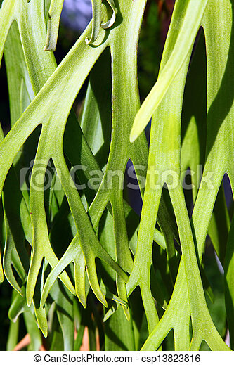 Decorative green leaf - csp13823816