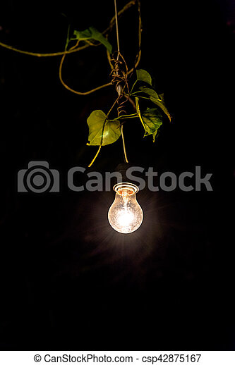 Decorative outdoor string lights hanging on tree in the stock decorative outdoor string lights hanging on tree in the garden at night time csp42875167 aloadofball Gallery