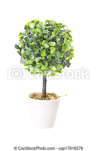 Decorative plant in the pot isolated on white background - csp17616376